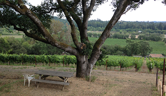 Moshin Vineyards, Sonoma, California