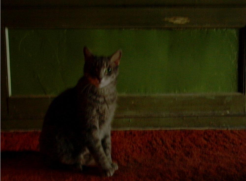Rothko Cat