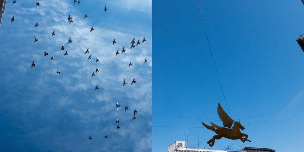 Pigeons2/Pegasus