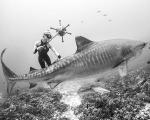 - Nos tests scientifiques indépendants ont récemment été menés sur la côte de l'Espérance en Australie, sous la supervision du scientifique mondialement renommée pour son travail avec les requins: OCEAN RAMSEY avec des données analysées par des scientifiques indépendants australiens et internationaux.
