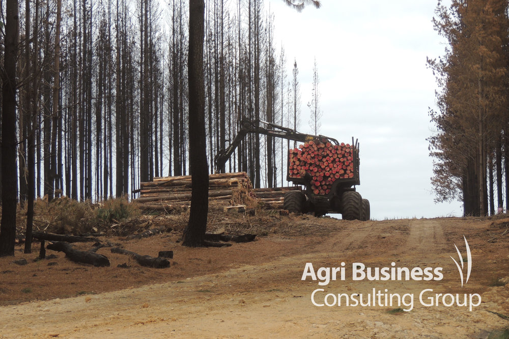Harvested burnt timber being gathered for salvage - WA