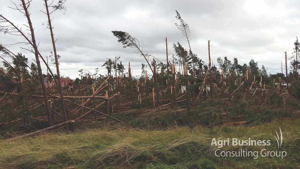 Wind storm damage sustained to a forest plantation.