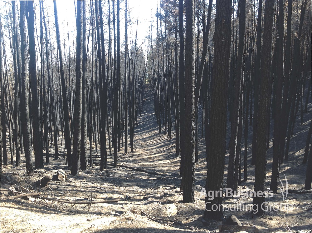 Severe forest fire.