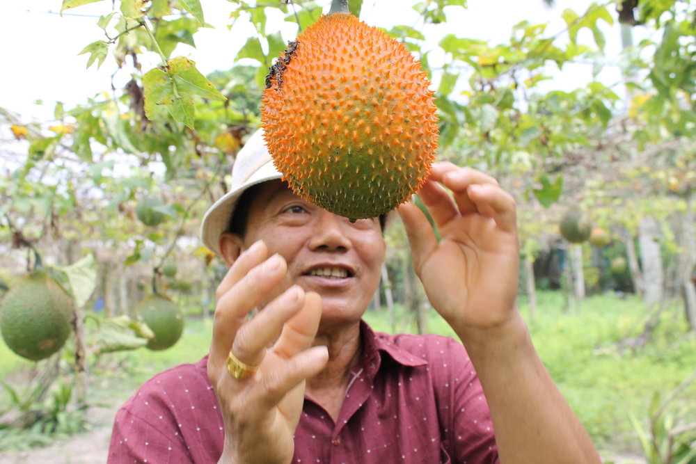 gac fruit farmer