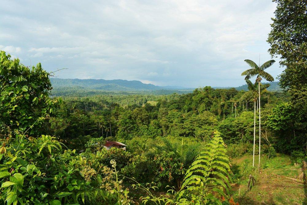 ¿Sabías qué? - En Ecuador sólo queda el 2% del bosque primario de la región del Chocó. La expansión de la frontera agrícola y la tala legal e ilegal se han identificado como las principales causas de su destrucción.