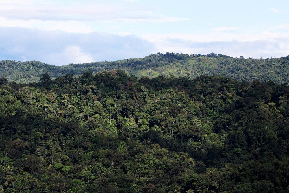 bosque 2.jpg