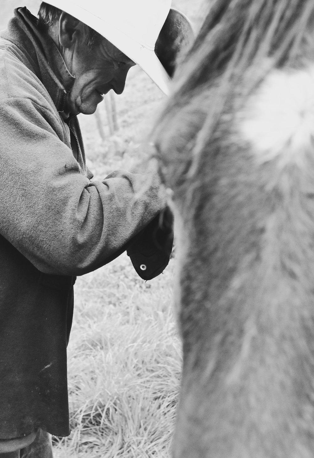 close-up-saddling-up-horse.jpg