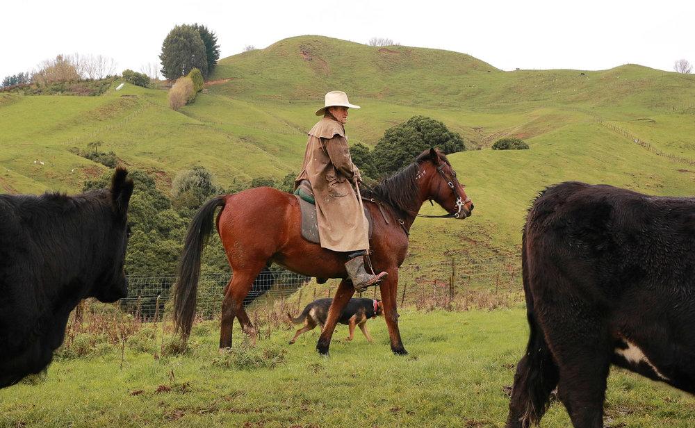 farmer-on-horse-moving-cattle-in-rain.jpg