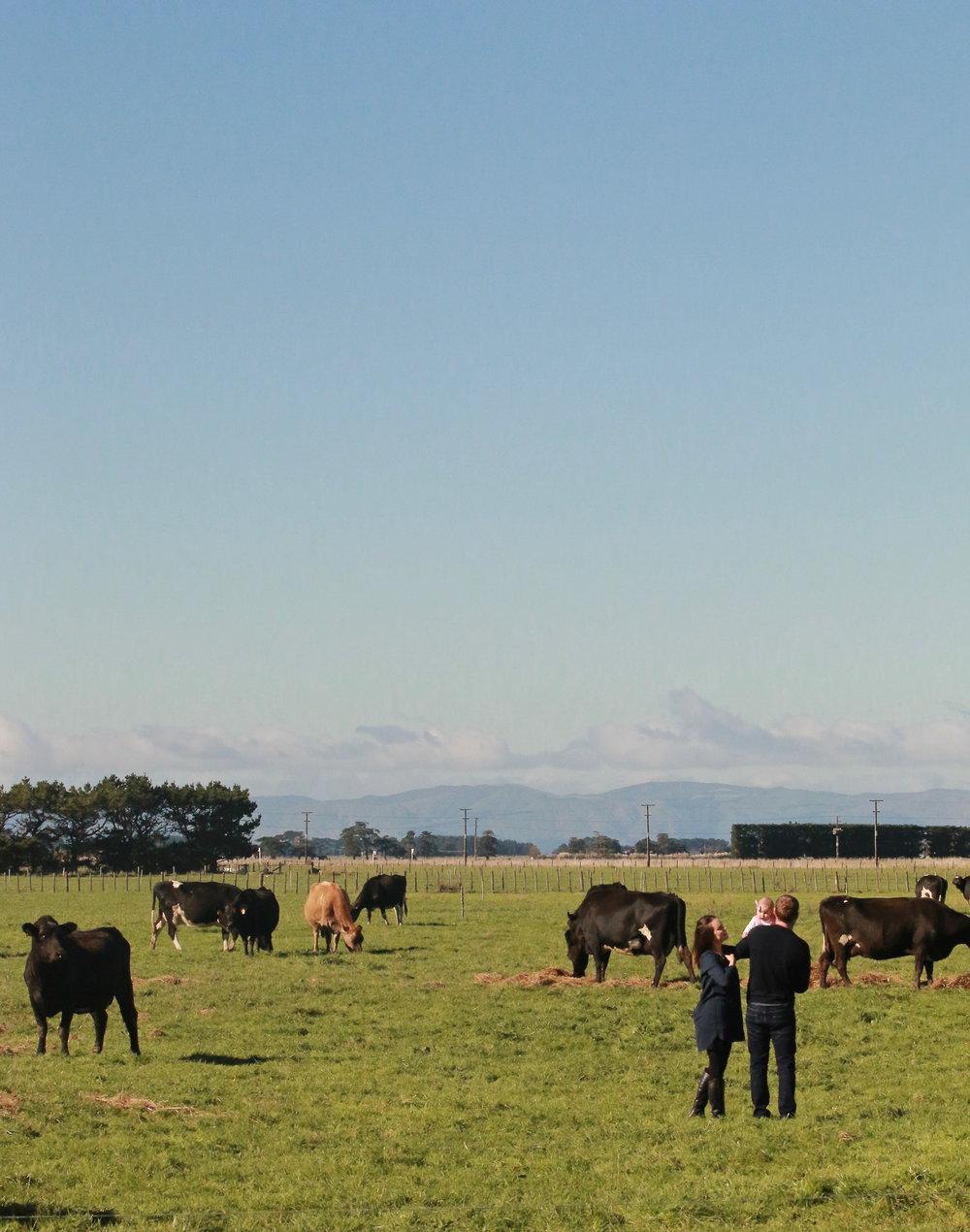 blue-sky-looking-over-herd.jpg