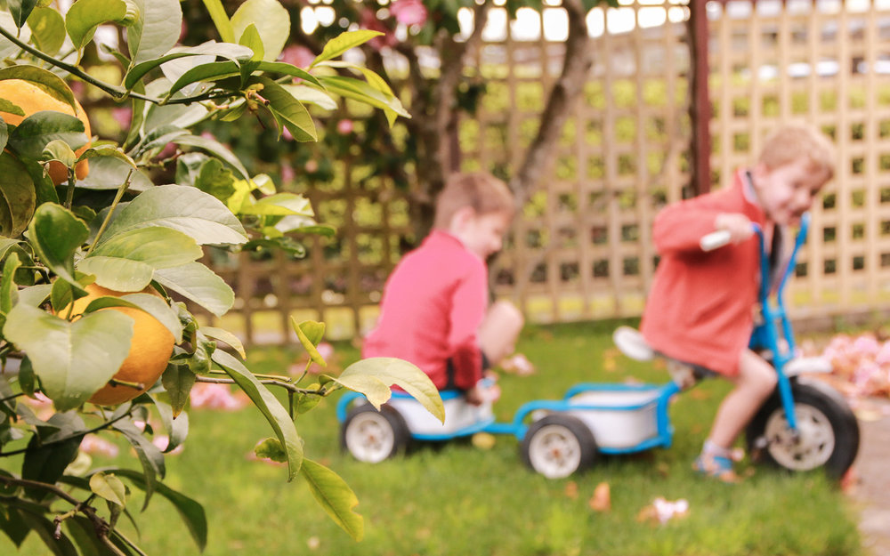 lemon-tree-in-focus-boys-playing-on-trike-in-background-out-of-focus-smiling-happy-brothers.jpg