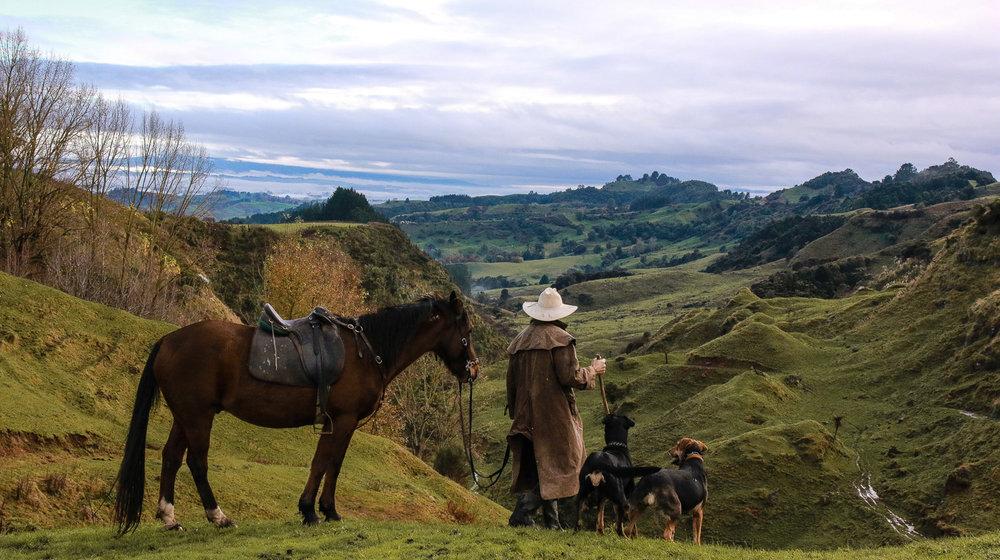 farmer-dogs-horse-moving-the-stock.jpg