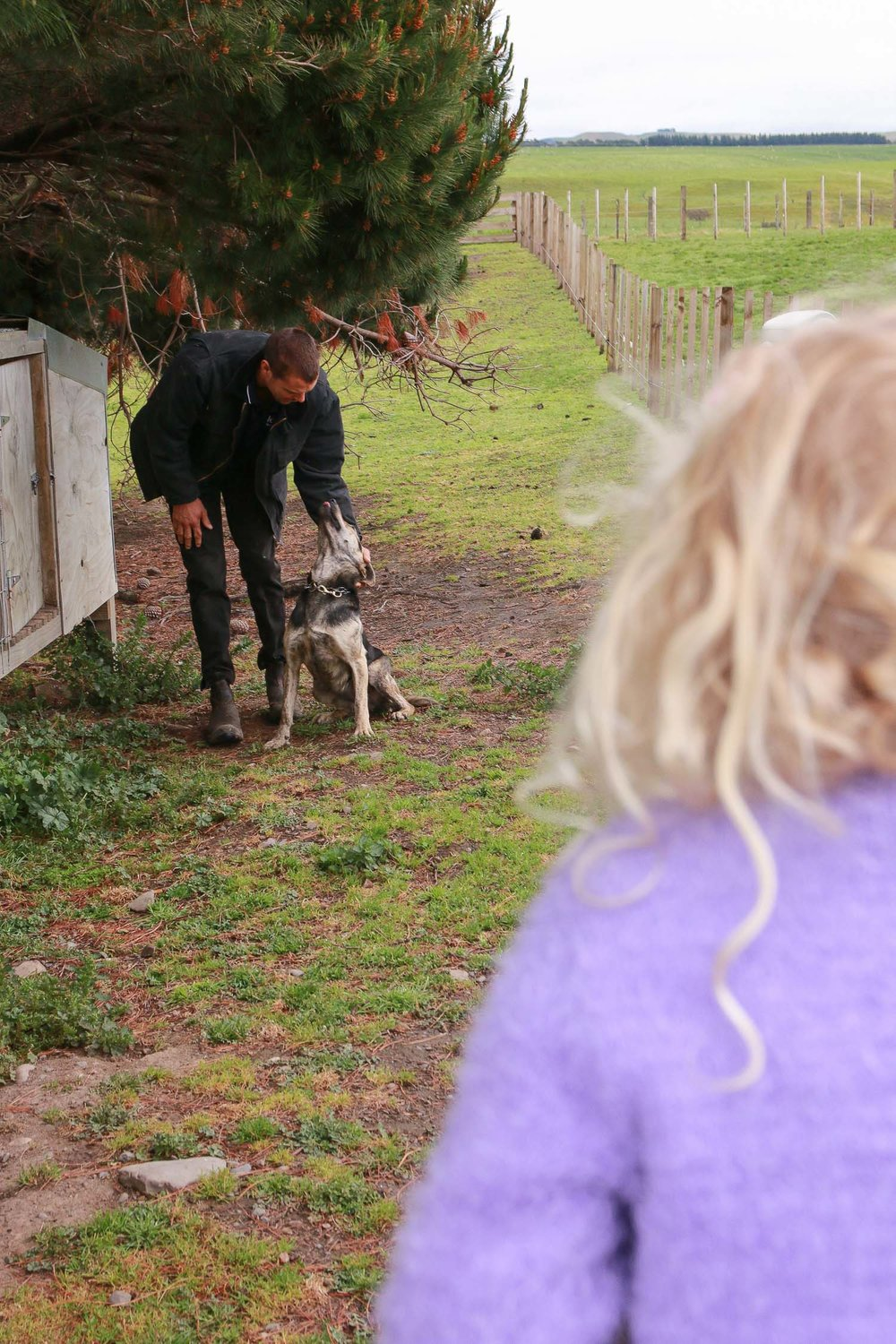 little-girl-on-fence-watching-dad-with-dogs-on-farm