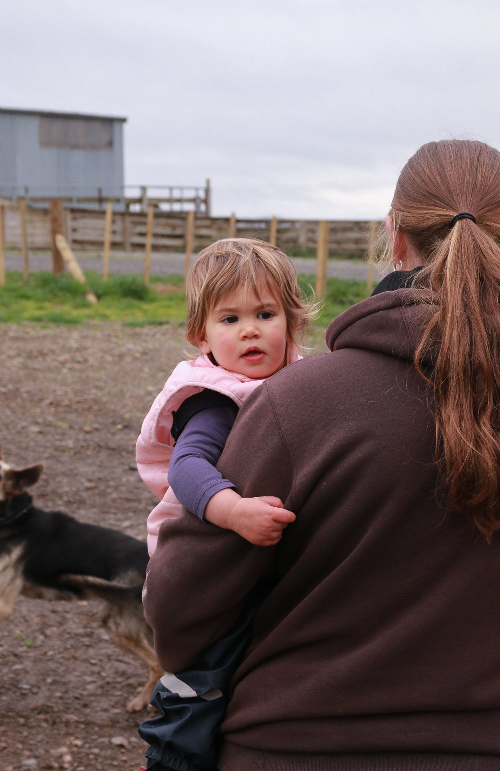 little-girl-on-farm-being-held-by-mum-dogs-in-background