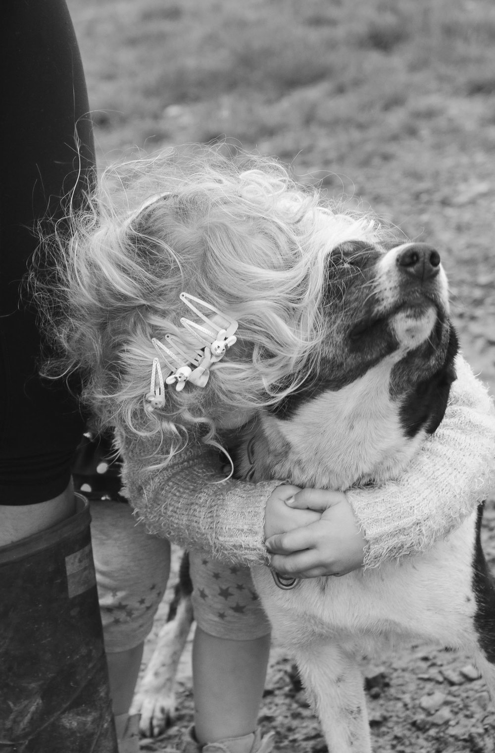 little-girl-wild-blode-curly-hair-holds-onto-farm-dog