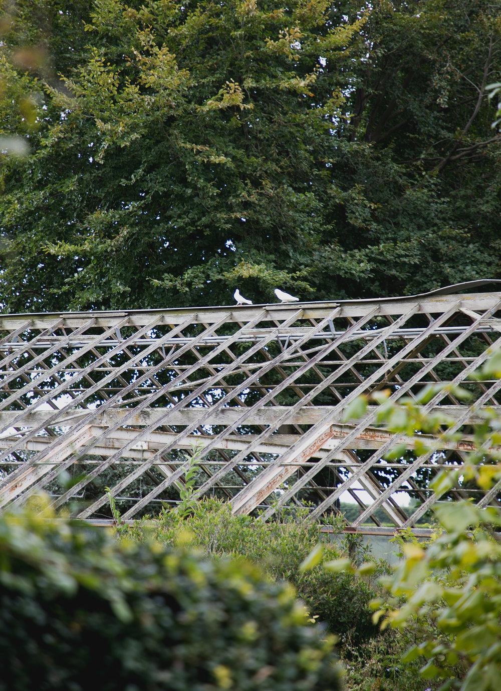 doves on abandoned glasshouse on wedding day