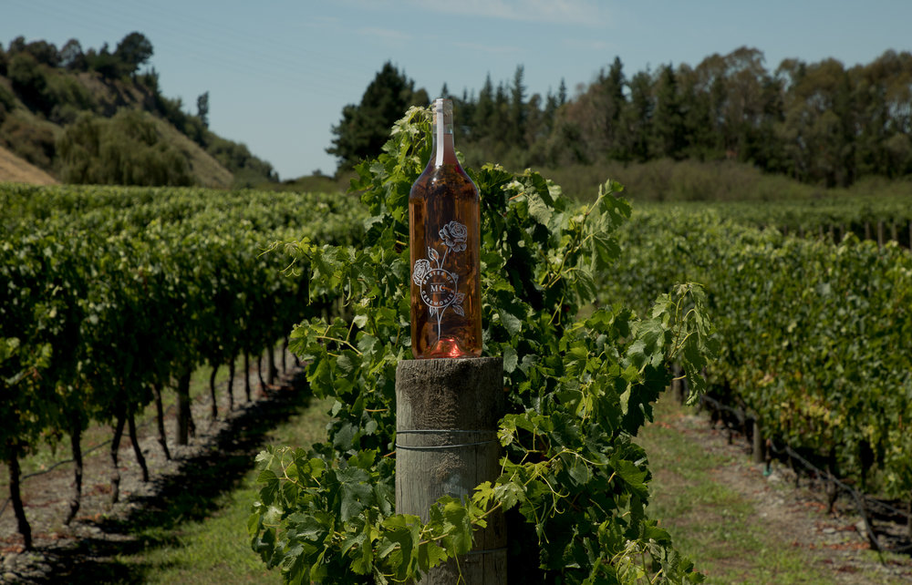 master-of-ceremonies-rose-in-the-vines.jpg