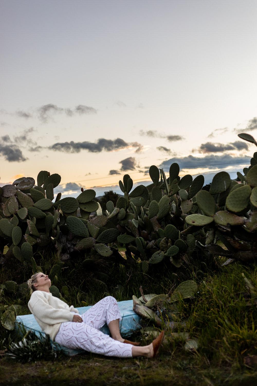 bay view cactus
