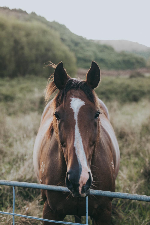 horse at sunset rural New Zealand