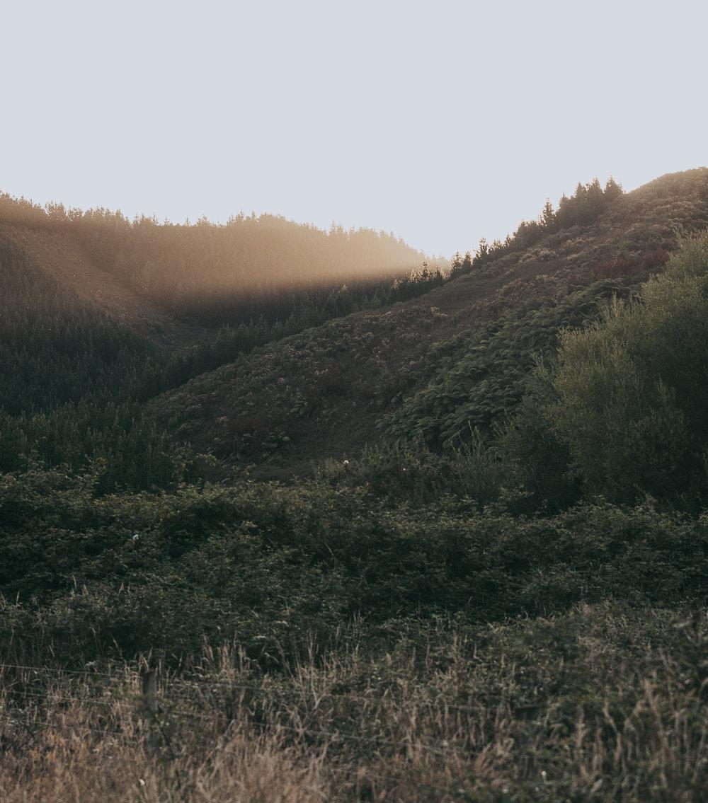 rural New Zealand at sunset