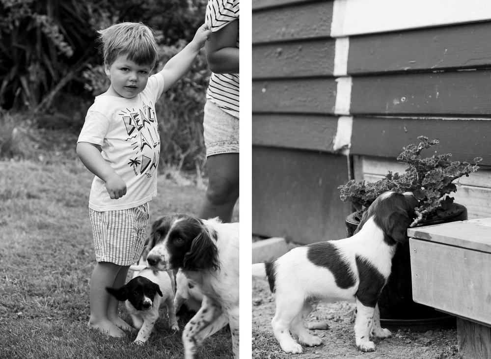 hawkes bay farming kids playing with puppies