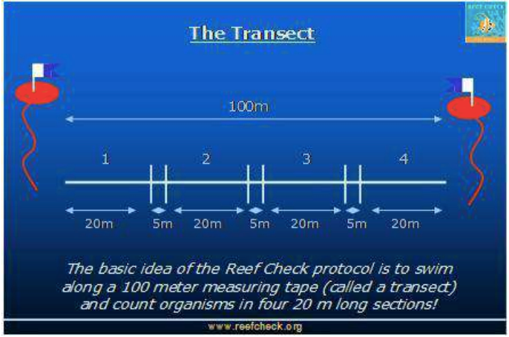 reef check image.png