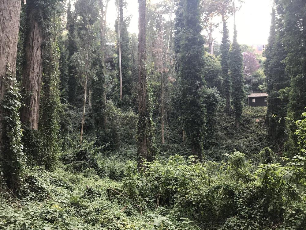 Lush overgrowth in the Interior Greenbelt