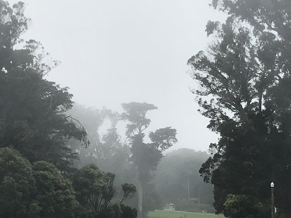 Golden Gate Park, yesterday in the fog. Pixelated because I zoomed in to get the cars out of the frame.