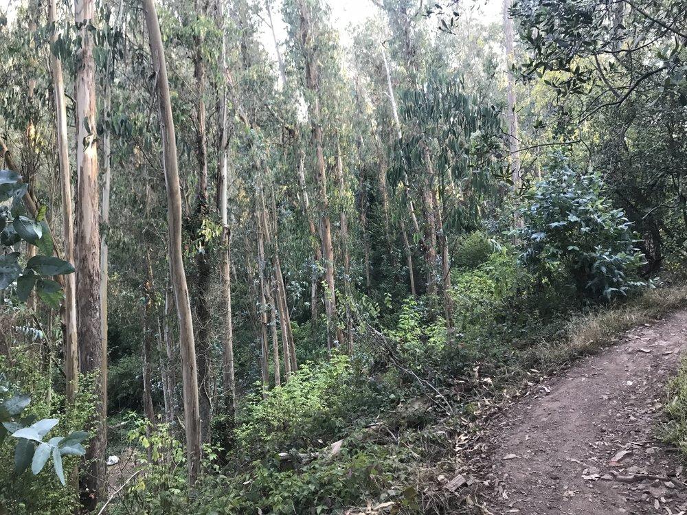 Last weekend in Mount Sutro Forest
