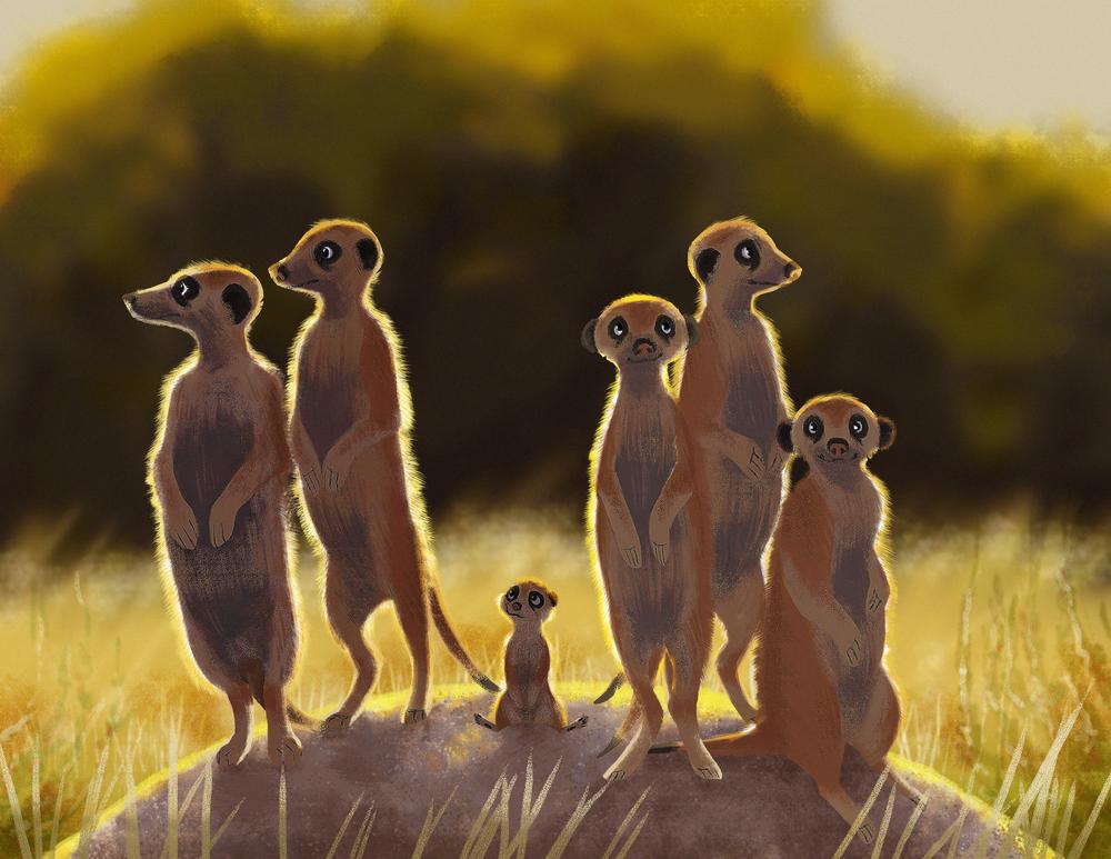 Meerkat Hill