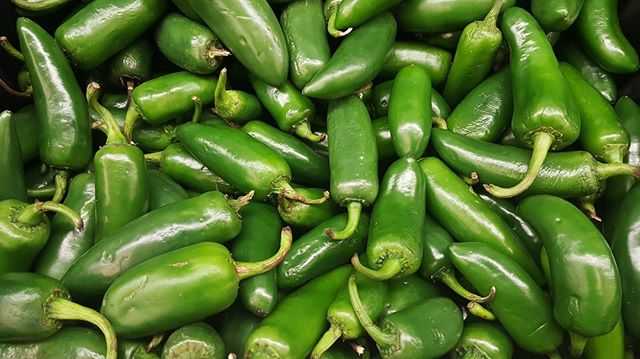 The current world record for the most jalapeños eaten in one minute is 16 ... tag a mate you think could beat it! ⠀⠀⠀⠀⠀⠀⠀⠀⠀ ⠀⠀⠀⠀⠀⠀⠀⠀⠀ #changzhotsauce #greenjalapeno #japapeno #jalapenos #hotsauce #hot #sauce #hotaf #spicy #chilli #chili #tropical #flavour #peppers #jalapenopeppers #pepper #vegan #glutenfree #keto #ketodiet #vegetarian #veganrecipes #veganfood #veganfoodlovers #healthy #mealprep healthyfood #americanbbq #southernbbq #lowandslow #lowcarb