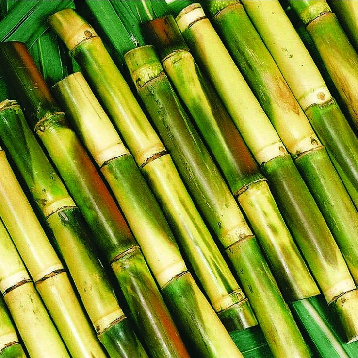 OLIGOSACCHARIDES from SUGAR CANE   Oligosaccharides establish bonds with the hair molecules, helping them retain moisture thank to their quaternary structure. They are also resistant to cleaning products which mean they provide a permanent solution for damaged hair.