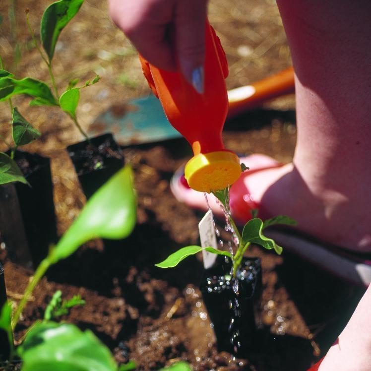 watering a seedling pg6.jpg