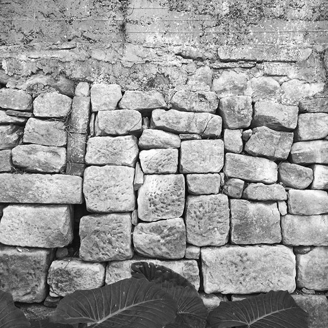Glebe sandstone #urbanexplorer