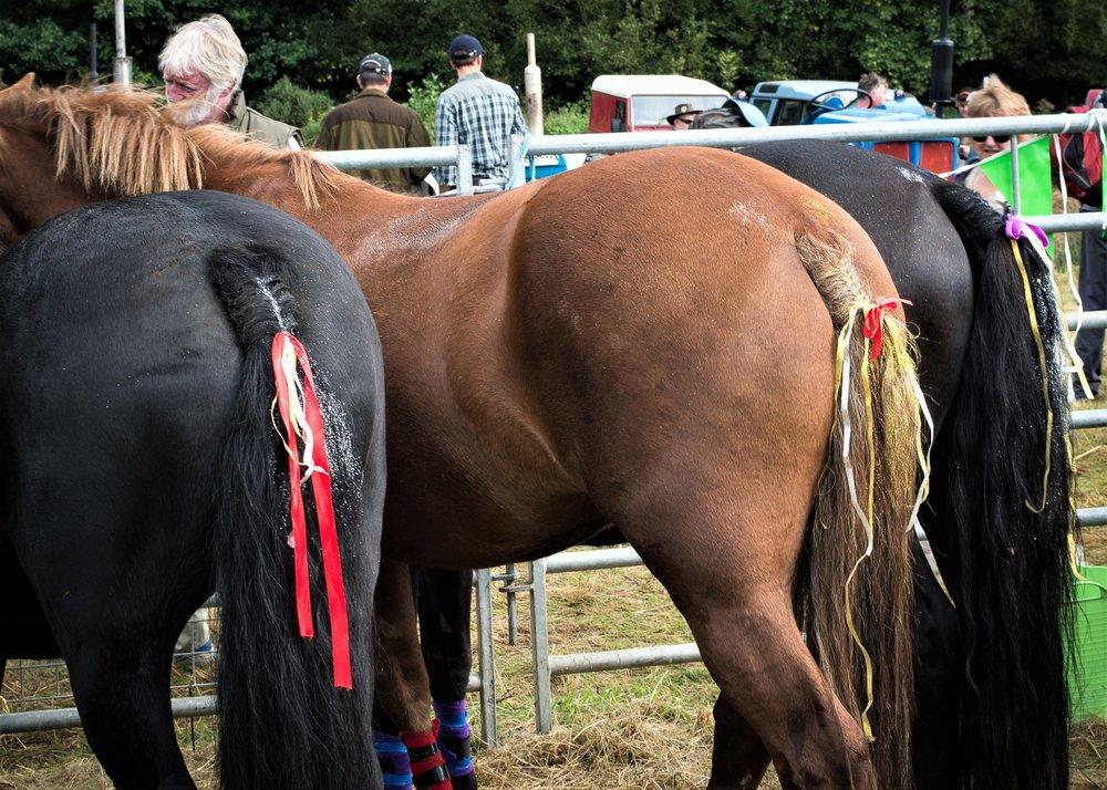 hill ponies.jpg