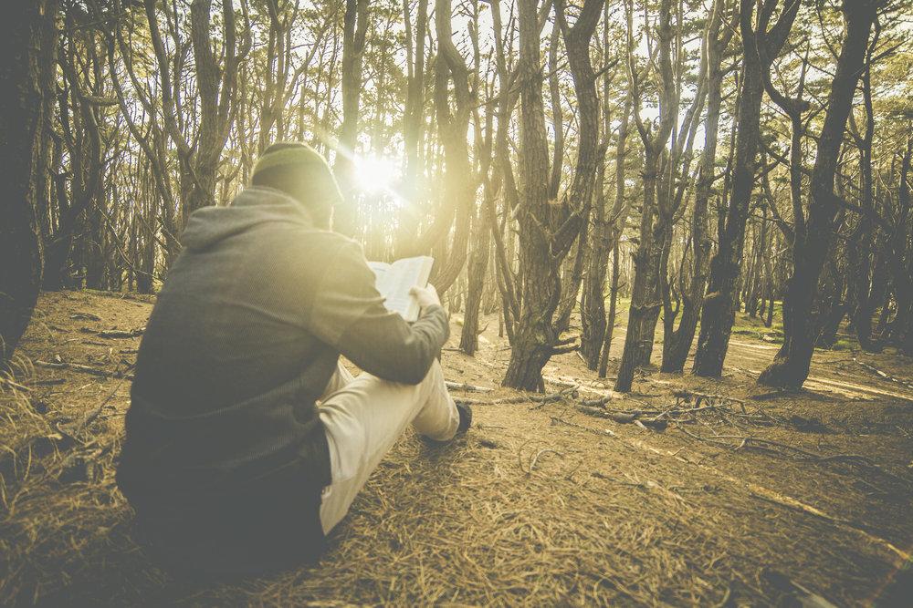 bible forest light.jpg
