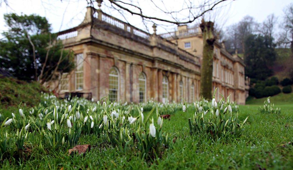 Snowdrops at Dyrham Park © National Trust / Laura Williams