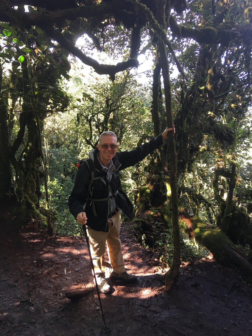Mossy forest walk