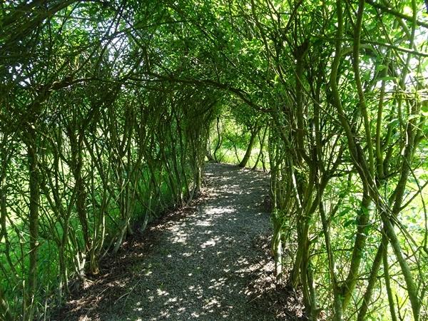 willow-tunnel.JPG