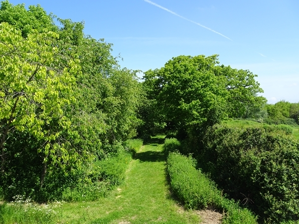 view-down-grass-path.JPG