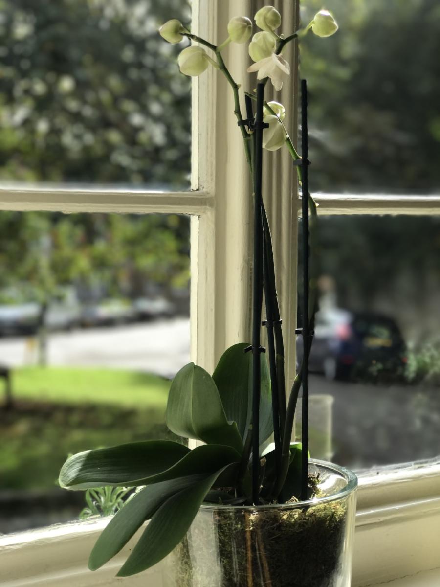 Hollist Orchid.jpg