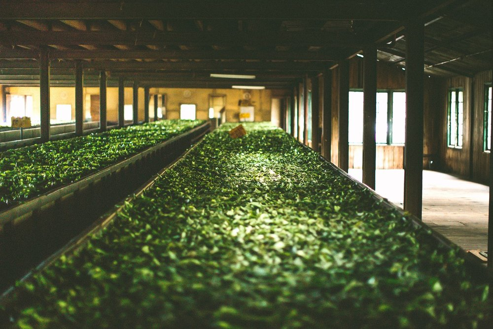 The drying process for tea leaves in a tea factory. Image: Vogue UK