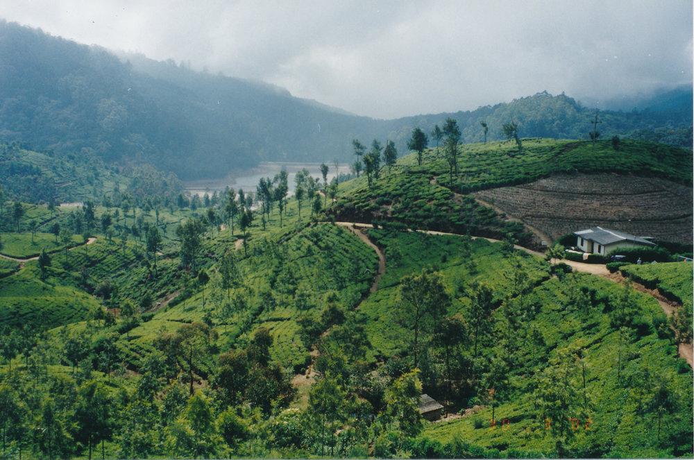Film_view from [Pedro Estate] tea near Nuwara Eliya - David (2).jpg