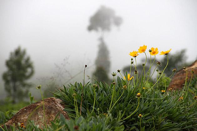 Wildflowers in Sri Lanka's tea country