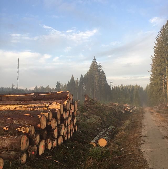 Windwurf#forst#forestroad#cleanup#kirmag#logging#goodmorning#forwarder