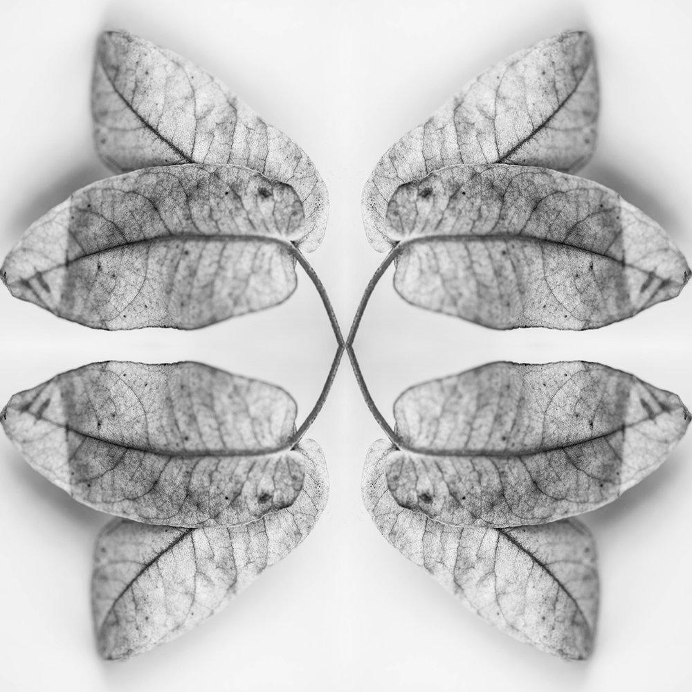leaf x 4.jpg