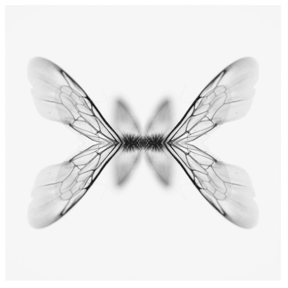 bee wing 2.jpg
