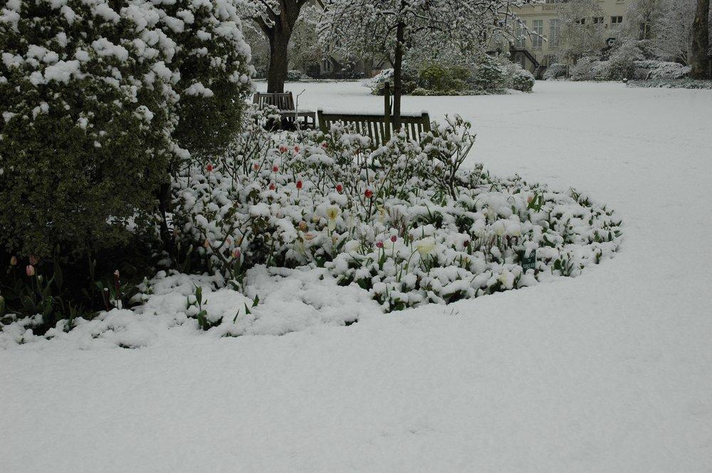Snowy Flowerbed.JPG