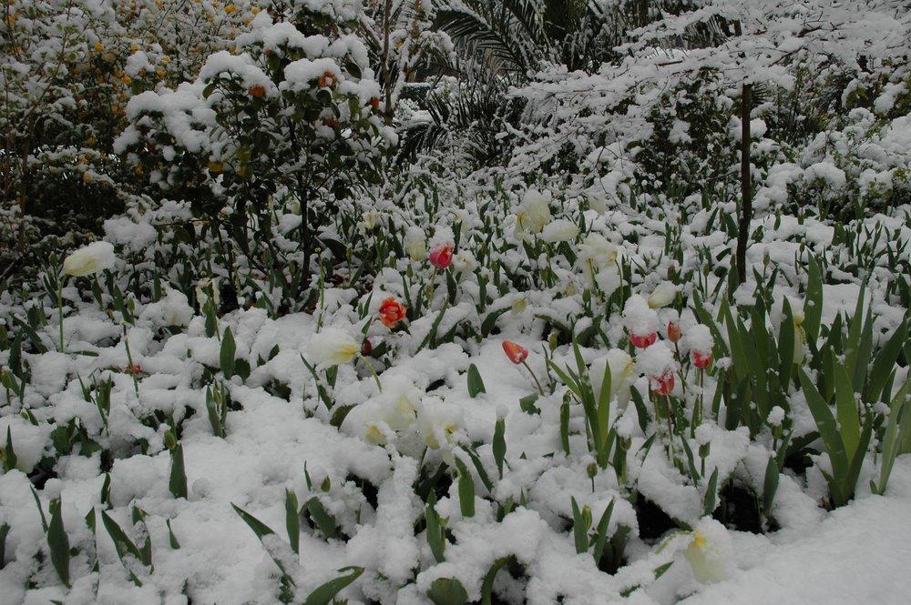 Snowy Flowerbed2.JPG