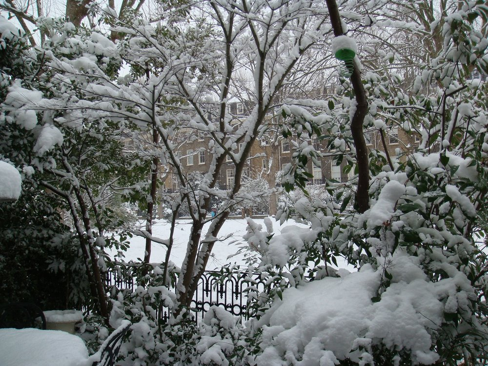 View Through Snowy Trees.JPG