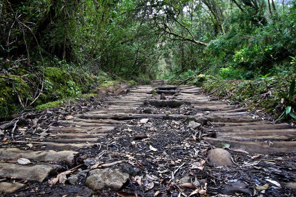 camino en la jungla.jpg